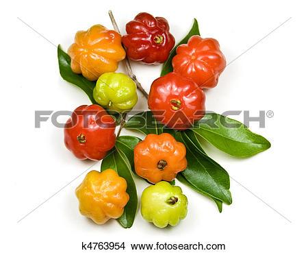 Stock Photo of Brazilian Cherry.