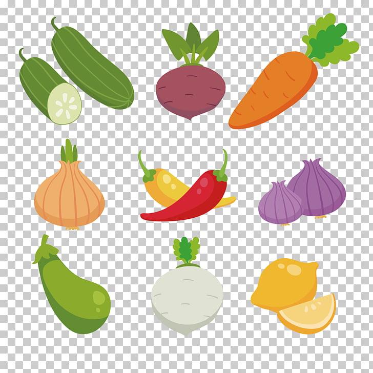 Rábano, colección de frutas y verduras coloreadas. PNG.