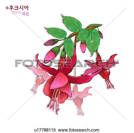 Stock Illustration of flowers, nature, plants, fuchsia, plant.