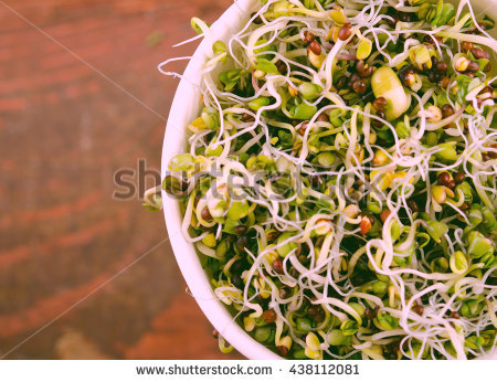 Fresh Alfalfa Sprouts Isolated On White Stock Foto 103336184.