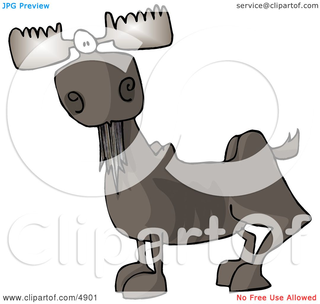 Full Grown Bull Moose with Antlers Clipart by Dennis Cox #4901.
