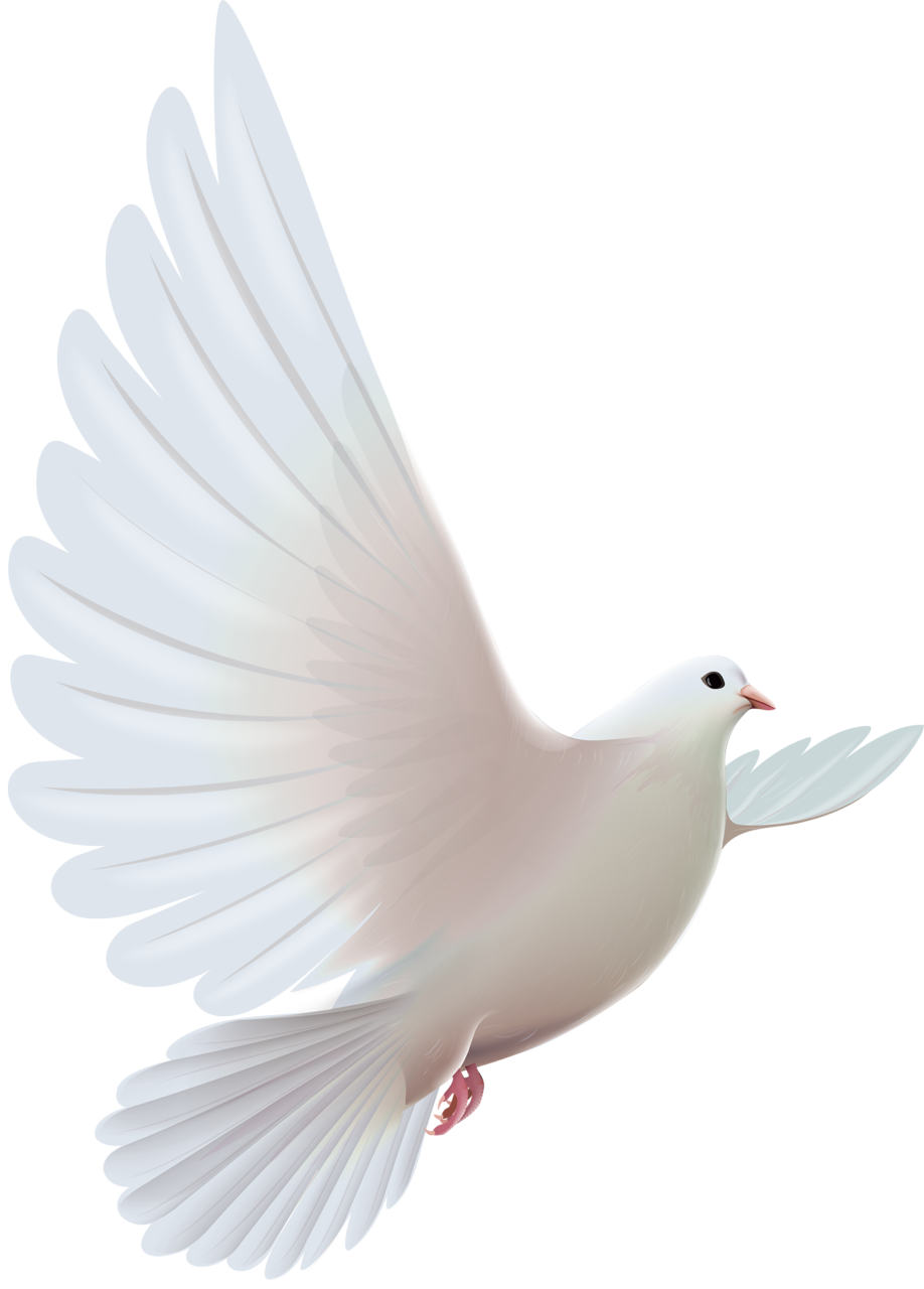 Dove clipart funeral, Dove funeral Transparent FREE for.