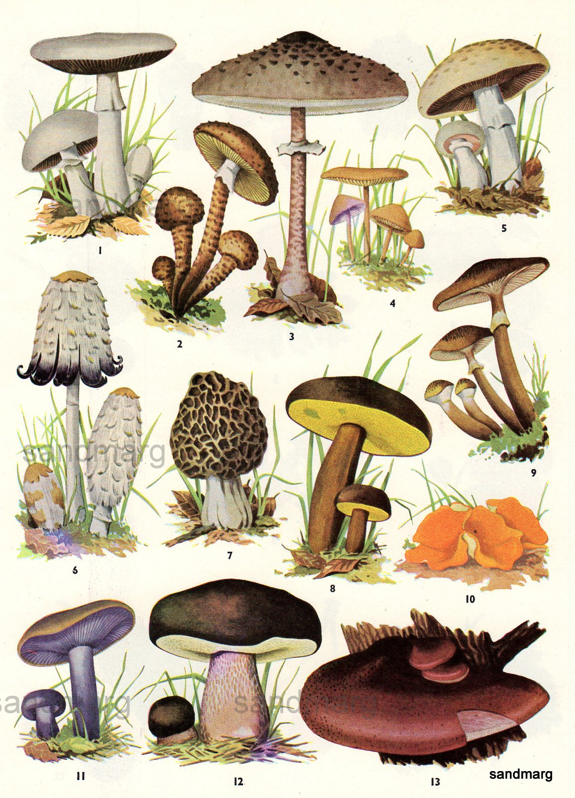 1000+ images about Mushrooms, Fungi and Spoors on Pinterest.