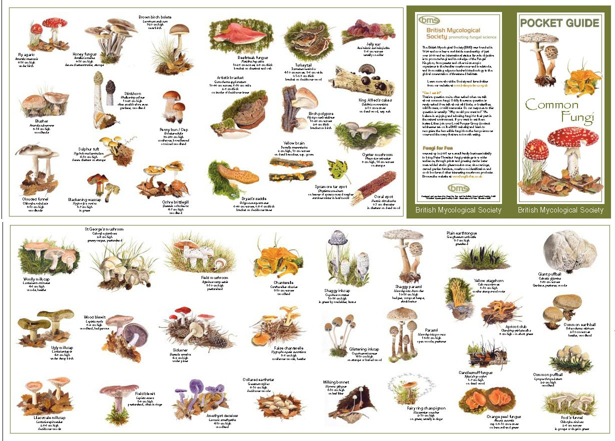 1000+ images about Mushrooms and Fungi on Pinterest.