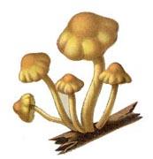 Free Fungi Pictures.