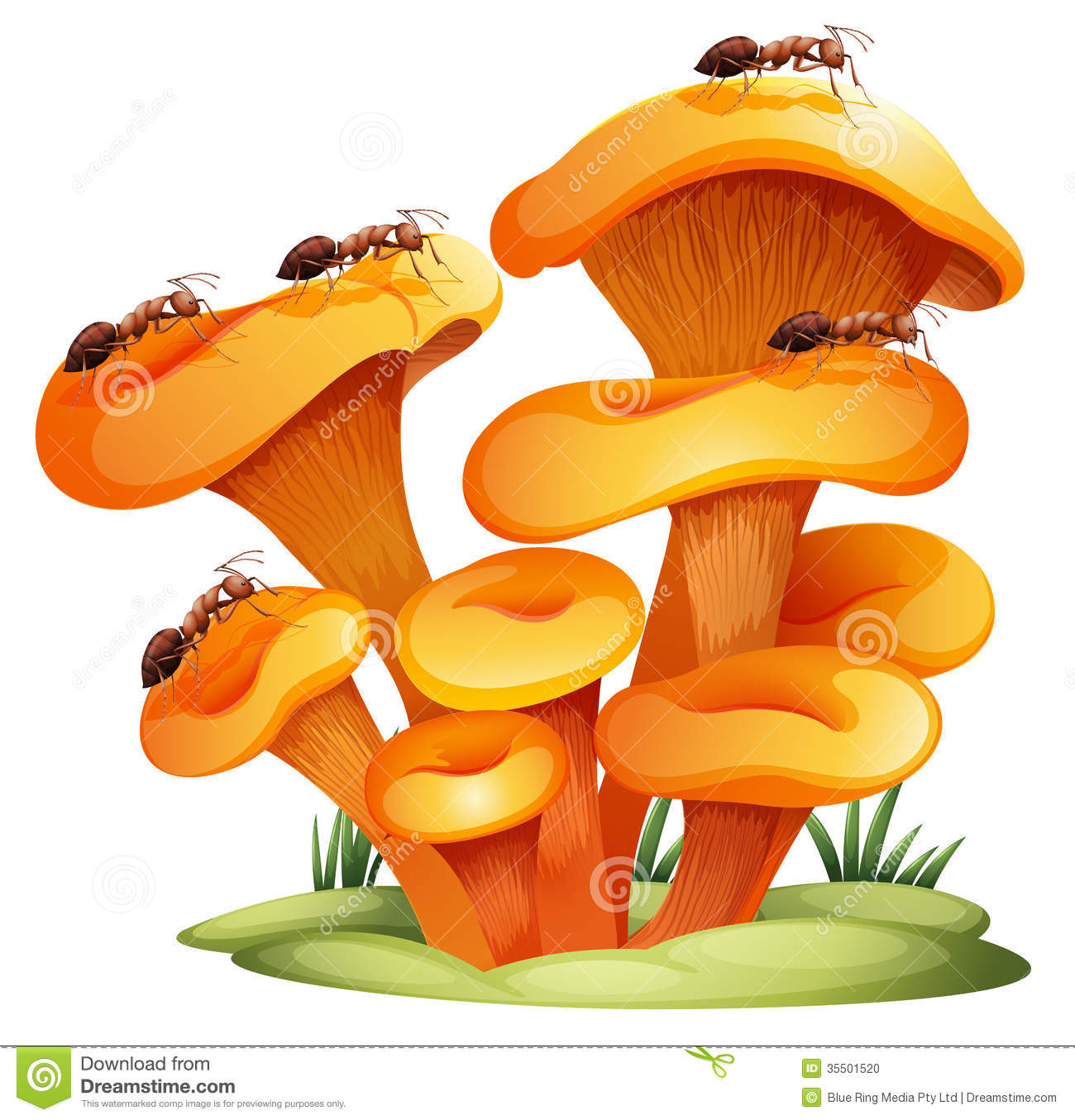 fungus clipart clipground Team Roping Drawings Team Roping Drawings