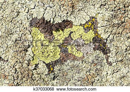 Pictures of Lichens are symbiotic fungi and algae. k37033068.