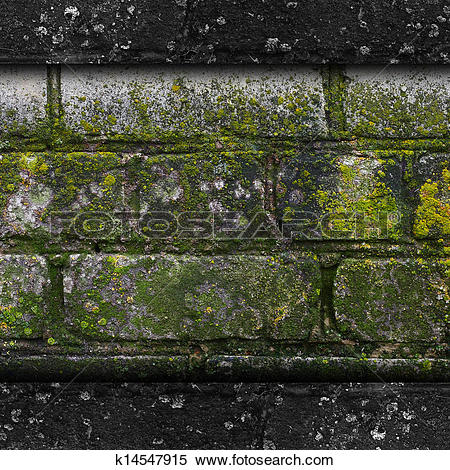 Stock Image of moss old green wall stone pattern mold gray texture.