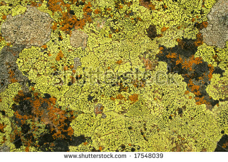Yellow And Bright Green Color Fungus On Rock As Background Stock.