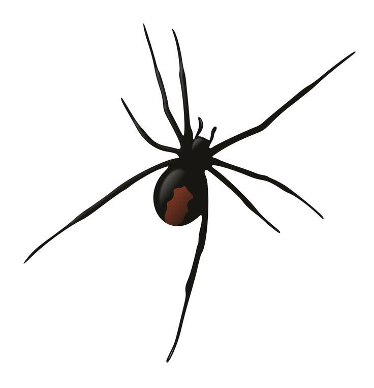 1000 idées sur le thème Redback Spider sur Pinterest.
