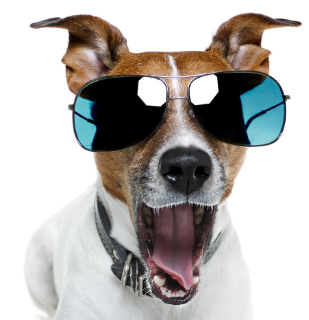 Funny Dog Png (103+ images in Collection) Page 2.