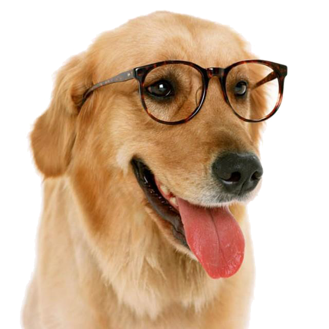 Funny Dog With Glass Png.