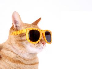 Funny cat clipart.