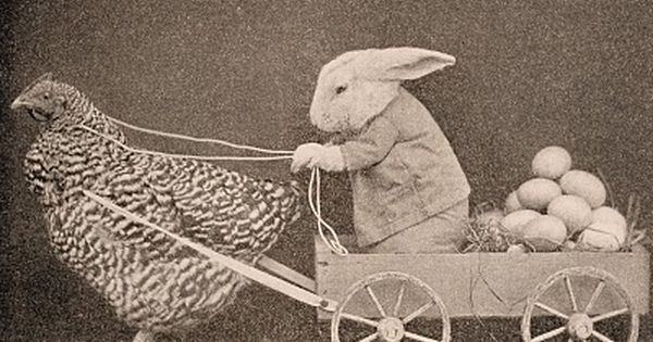 17 Best ideas about Funny Easter Bunny on Pinterest.