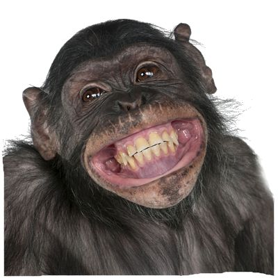 Funny Monkey PNG HD Transparent Funny Monkey HD.PNG Images..