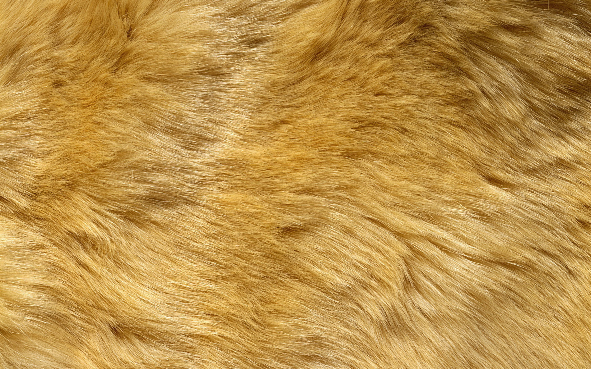 Yellow_Fur_Background.jpg?m=1432120714.