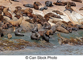Fur seal Stock Photo Images. 5,195 Fur seal royalty free pictures.