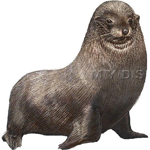 Fur Seal Clipart Graphics Free Clip Art #7GqcOO.