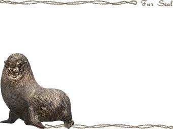 Fur Seal clipart graphics (Free clip art.