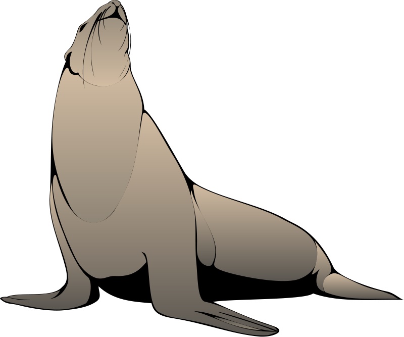 Seal animal clipart.