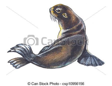 Fur seal Illustrations and Stock Art. 1,397 Fur seal illustration.
