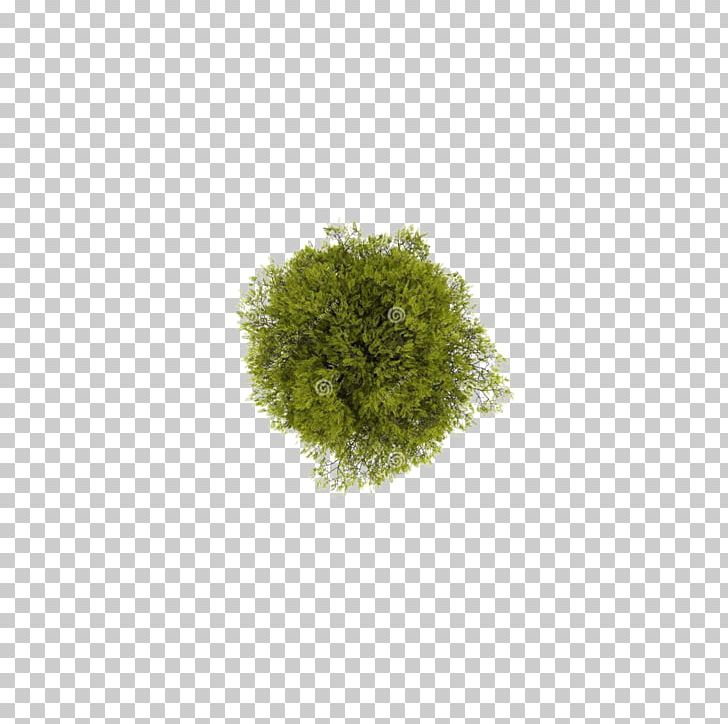 Tree Computer File PNG, Clipart, 2d Computer Graphics.