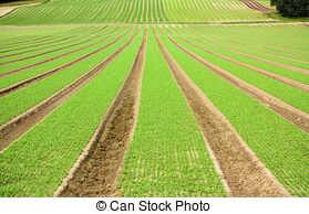 Furrow Stock Photo Images. 4,651 Furrow royalty free pictures and.