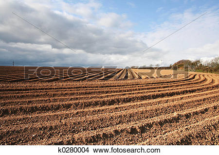 Stock Photo of Ploughed Field Furrows k0280004.