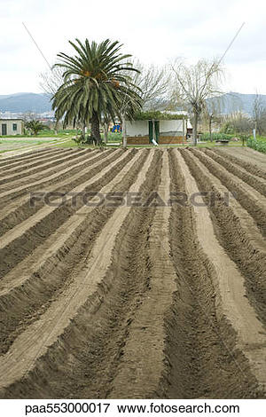 Picture of Uniform furrows of plowed field paa553000017.