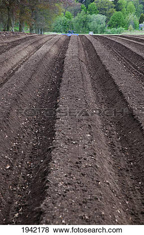 Pictures of Furrows In The Soil; Perth Scotland 1942178.