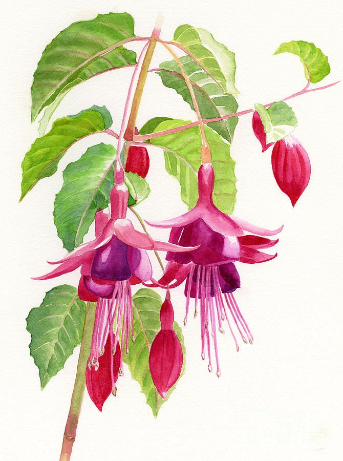 17 Best images about fuchsia on Pinterest.