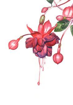 Flamenco Dancer' Fuchsia original watercolor available from art.