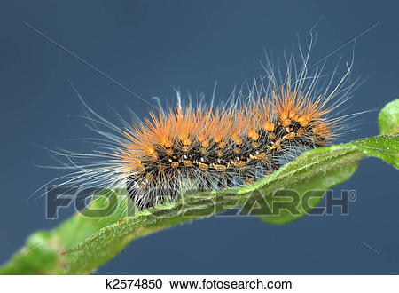 Fuzzy caterpillar clipart 4 » Clipart Station.