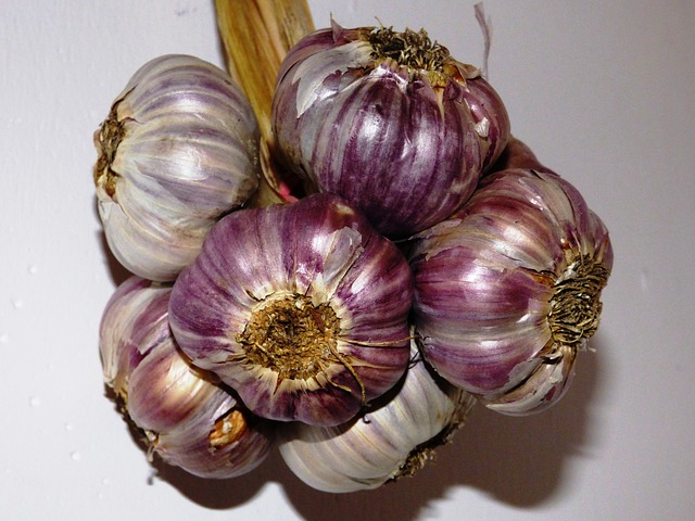 Free pictures GARLIC.