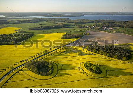 """Stock Image of """"Aerial view, Rape fields between Gohren and Klink."""