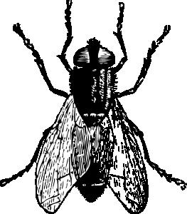 Gadfly Clip Art Download.