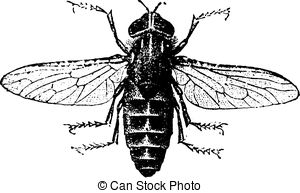 Gadfly Vector Clipart EPS Images. 29 Gadfly clip art vector.