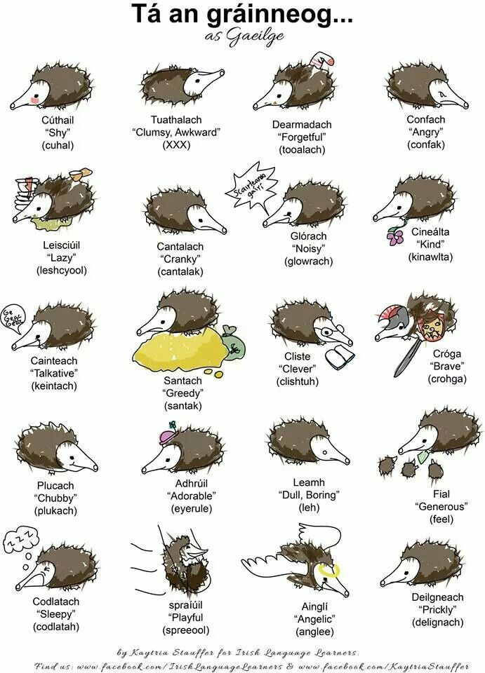 1000+ images about At School_Gaeilge on Pinterest.