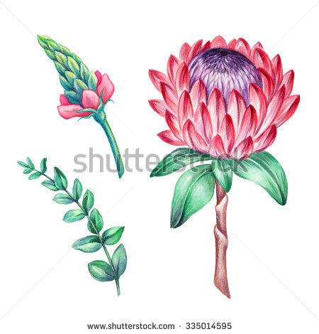 Flower Clip Art Stock Photos, Royalty.