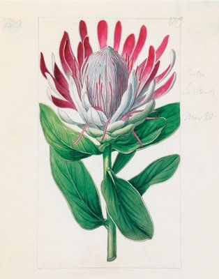 1000+ images about Botanical and Nature Prints.