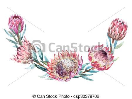 Protea Illustrations and Clip Art. 61 Protea royalty free.