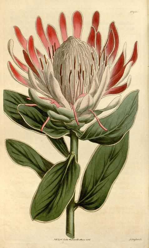 1000+ images about Historia natural on Pinterest.