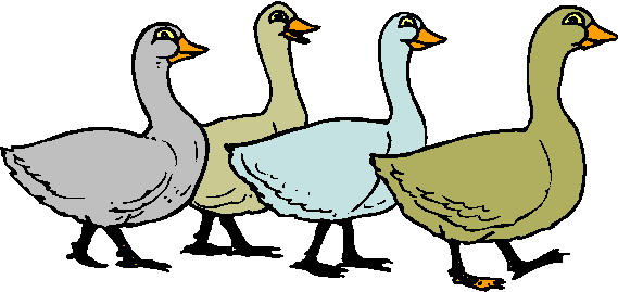 Images Of Geese.