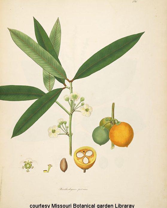 Botany Plant.