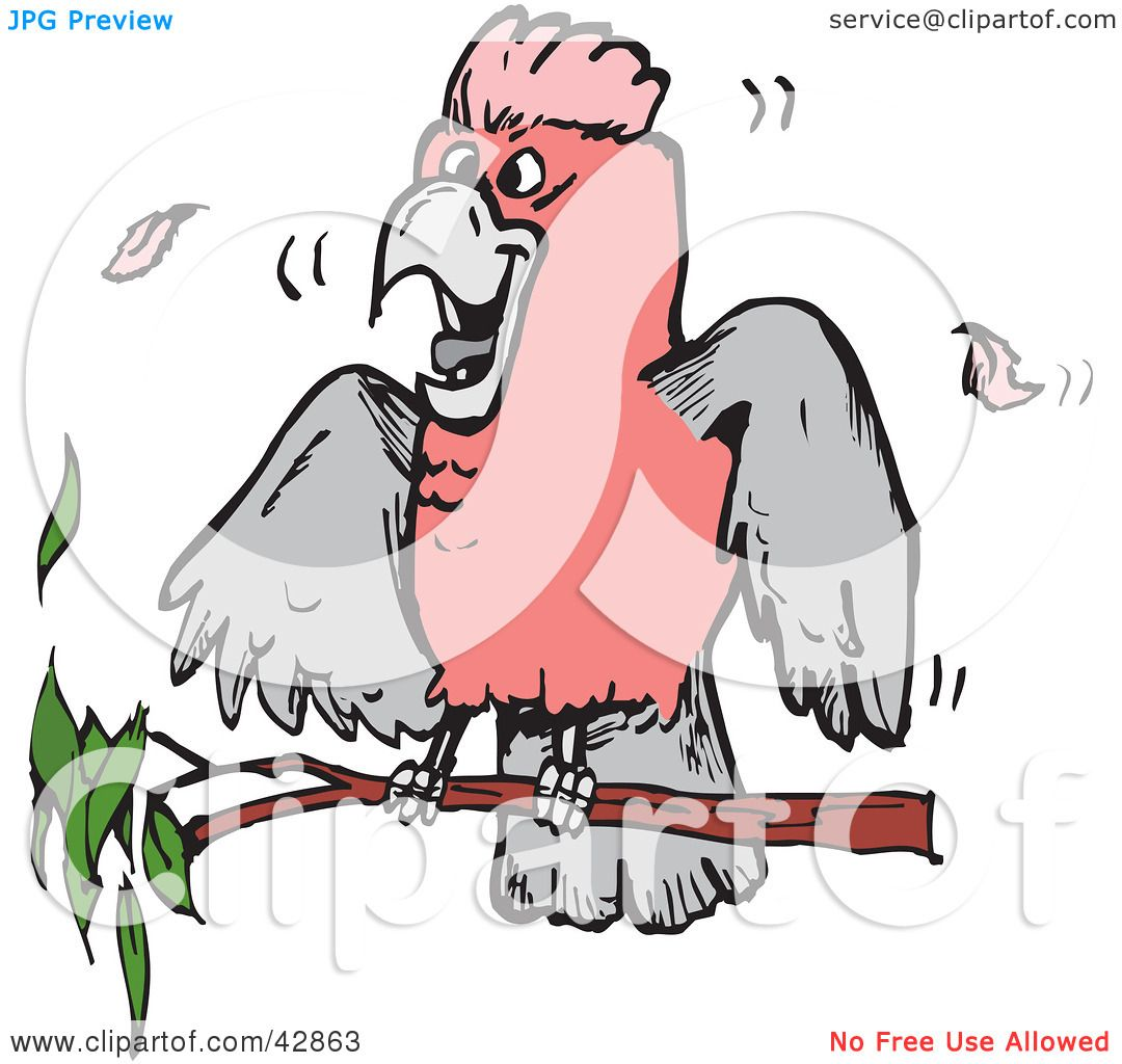 Clipart Illustration of a Pink And Grey Galah Cockatoo Bird On A.