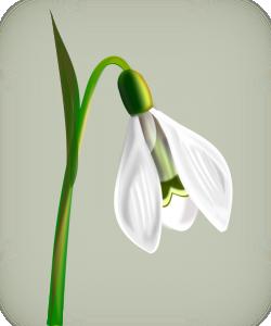 Snowdrop Clip Art Download.