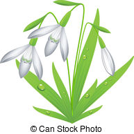 Snowdrop Illustrations and Clipart. 1,134 Snowdrop royalty free.
