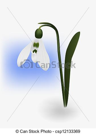 Stock Illustration of snowdrop ilustration on white background.