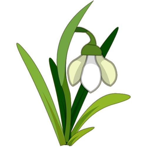 Snowdrop Flower Tattoo.