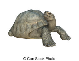 Galapagos tortoise Illustrations and Clipart. 64 Galapagos.